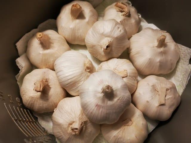Black Garlic i riskokaren, med hushållspapper under och över